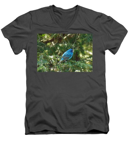 Indigo Bunting Visit Men's V-Neck T-Shirt