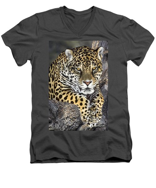 Jaguar Portrait Wildlife Rescue Men's V-Neck T-Shirt by Dave Welling