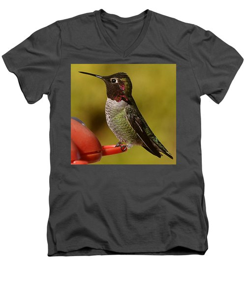 Men's V-Neck T-Shirt featuring the photograph Juvenile Male Anna by Jay Milo