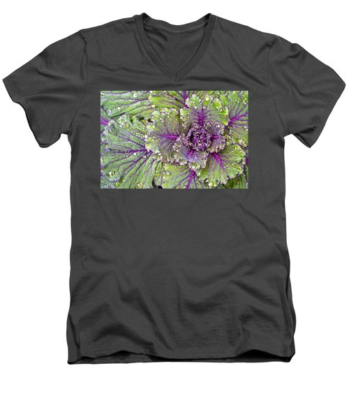 Kale Plant In The Rain Men's V-Neck T-Shirt