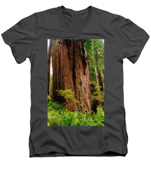 Kevin And The Big Tree - Redwood National Forest Men's V-Neck T-Shirt