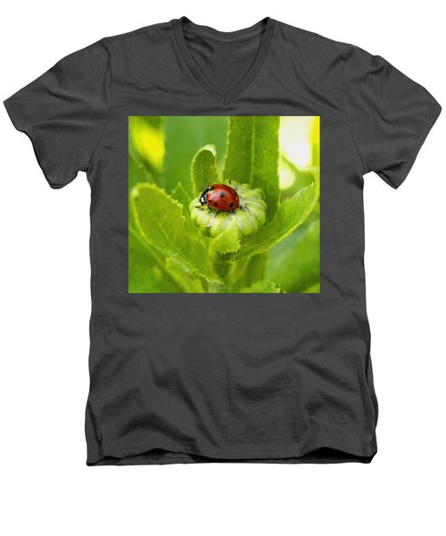 Lady Bug In The Garden Men's V-Neck T-Shirt