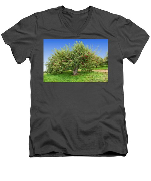 Large Apple Tree Men's V-Neck T-Shirt