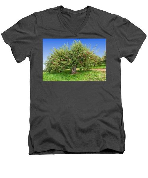 Large Apple Tree Men's V-Neck T-Shirt