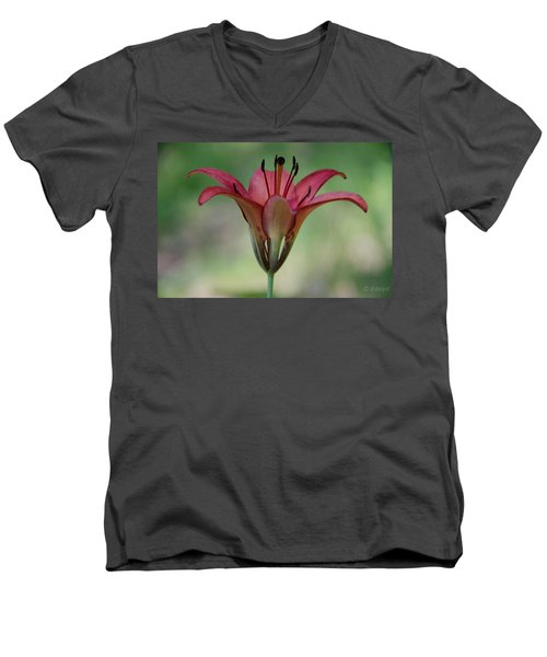 Lillium Philadelphicum Men's V-Neck T-Shirt