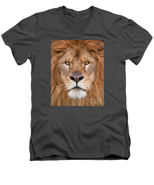 Men's V-Neck T-Shirt featuring the photograph Lion Close Up by Jerry Fornarotto