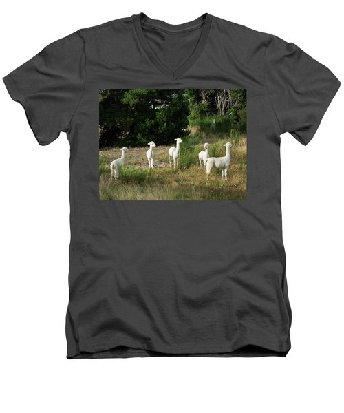 Llamas Standing In A Forest Men's V-Neck T-Shirt by Panoramic Images