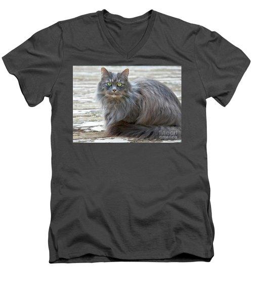 Long Haired Gray Cat Art Prints Men's V-Neck T-Shirt