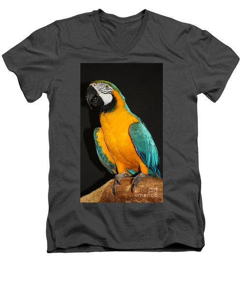 Macaw Hanging Out Men's V-Neck T-Shirt by John Telfer
