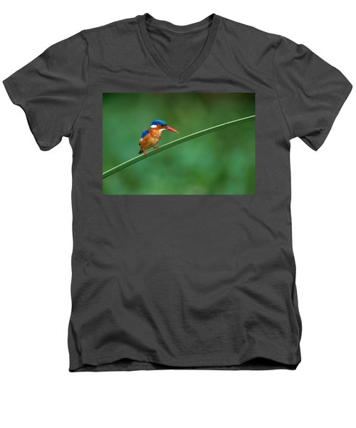 Malachite Kingfisher Tanzania Africa Men's V-Neck T-Shirt by Panoramic Images