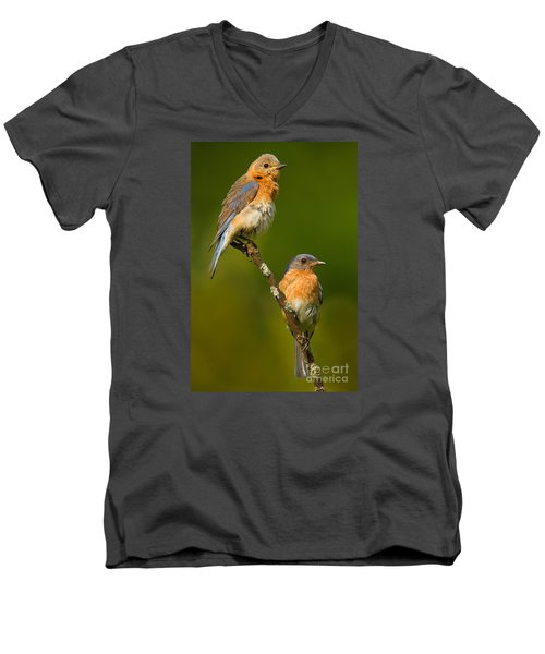 Men's V-Neck T-Shirt featuring the photograph Male And Female Bluebirds by Jerry Fornarotto
