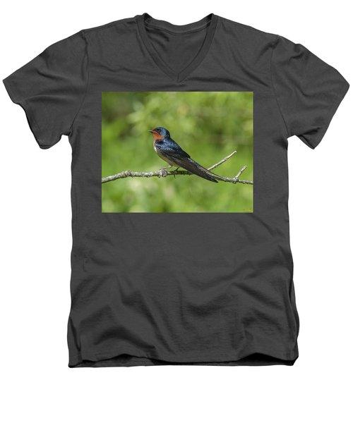 Male Barn Swallow Hirundo Rustica Dsb262 Men's V-Neck T-Shirt