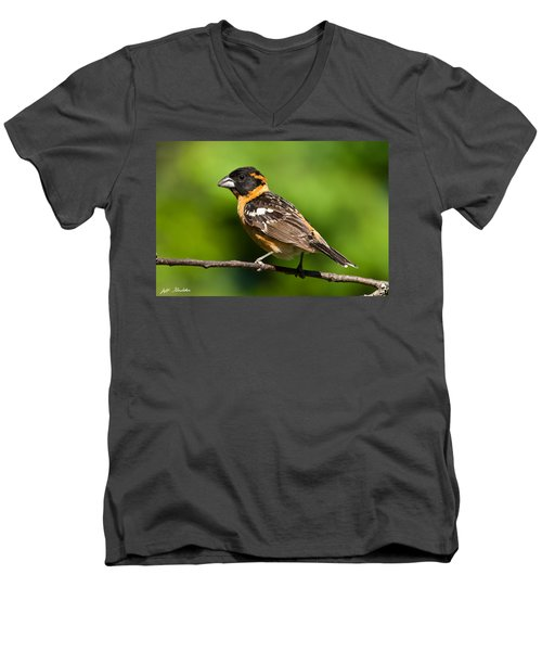 Male Black Headed Grosbeak In A Tree Men's V-Neck T-Shirt