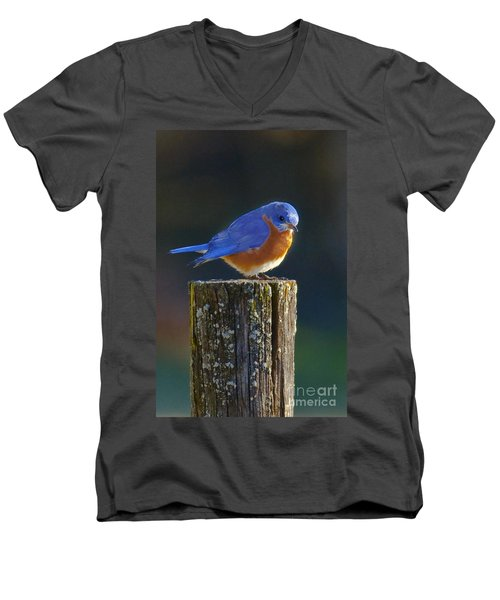 Male Bluebird Men's V-Neck T-Shirt