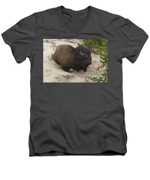 Male Buffalo At Hot Springs Men's V-Neck T-Shirt by Belinda Greb