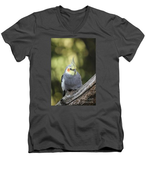 Men's V-Neck T-Shirt featuring the photograph Male Cockatiel by Judy Whitton