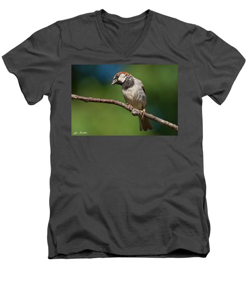Male House Sparrow Perched In A Tree Men's V-Neck T-Shirt