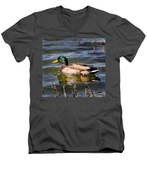 Mallard In Pond Men's V-Neck T-Shirt