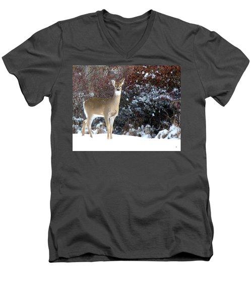 March Snow And A Doe Men's V-Neck T-Shirt