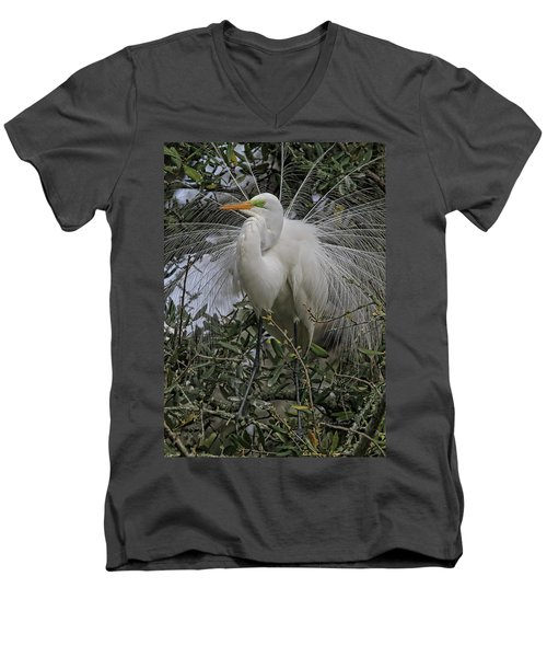 Mating Plumage Men's V-Neck T-Shirt