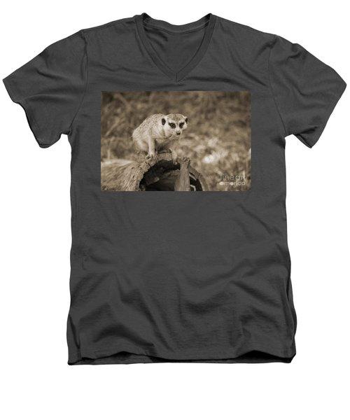 Meerkat On A Log Men's V-Neck T-Shirt by Douglas Barnard