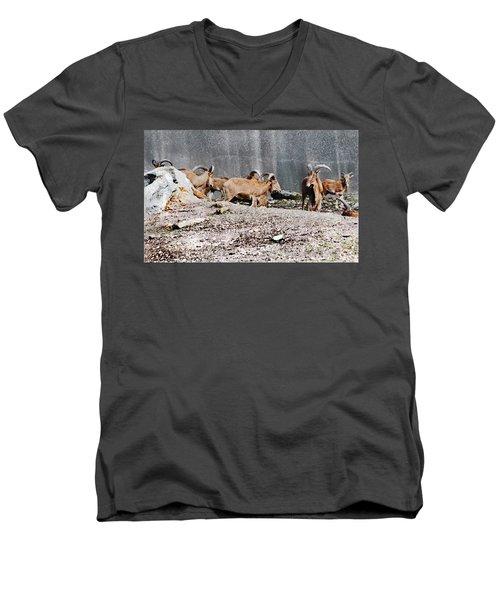 Meeting Of Barbary Sheep Men's V-Neck T-Shirt