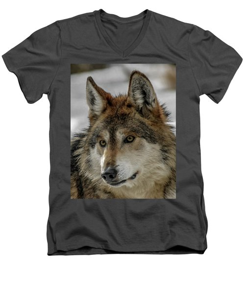 Mexican Grey Wolf Upclose Men's V-Neck T-Shirt