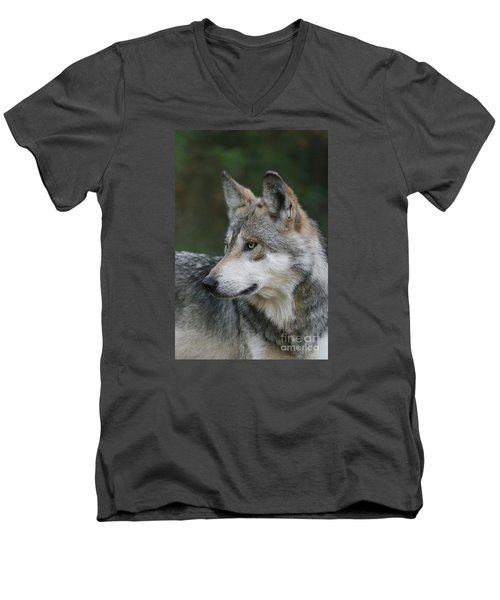 Mexican Wolf #6 Men's V-Neck T-Shirt by Judy Whitton