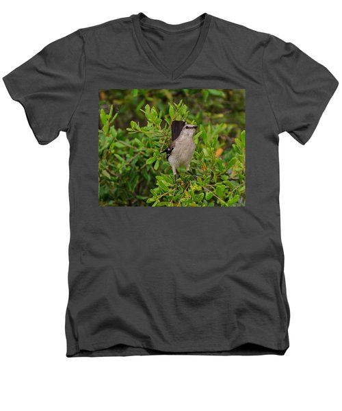 Mockingbird In Tree Men's V-Neck T-Shirt