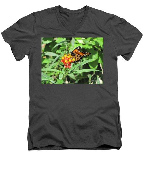Monarch At Rest Men's V-Neck T-Shirt