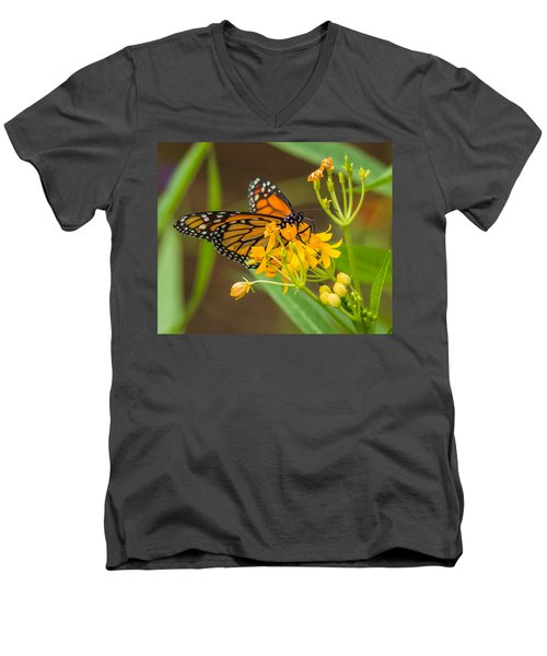 Men's V-Neck T-Shirt featuring the photograph Monarch by Jane Luxton