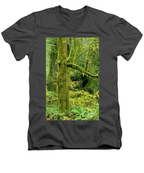 Men's V-Neck T-Shirt featuring the photograph Moss Draped Big Leaf Maple California by Dave Welling