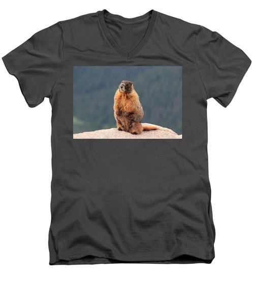 Men's V-Neck T-Shirt featuring the photograph Mother Marmot by Shane Bechler