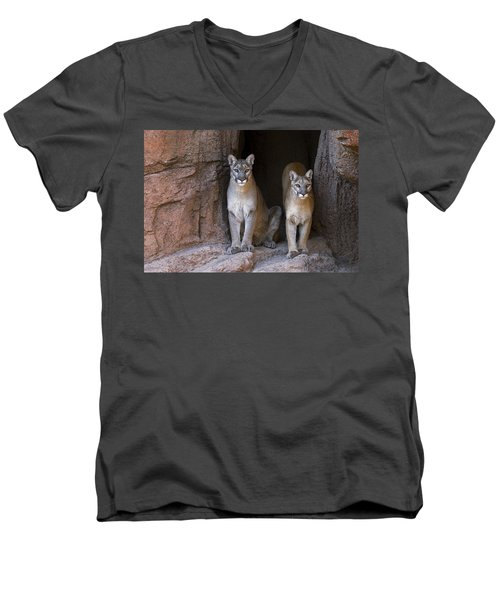 Men's V-Neck T-Shirt featuring the photograph Mountain Lion 2 by Arterra Picture Library