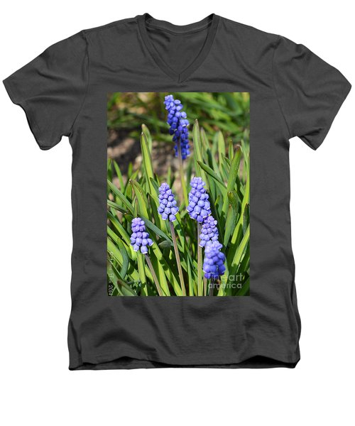 Muscari Armeniacum Men's V-Neck T-Shirt