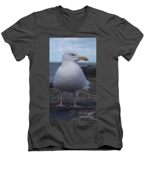 New Quay Gull  Men's V-Neck T-Shirt by John Williams