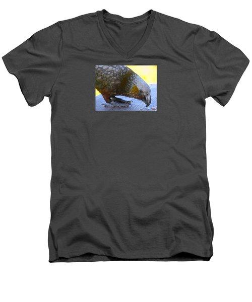 New Zealand Kaka Happy Hour Men's V-Neck T-Shirt by Venetia Featherstone-Witty