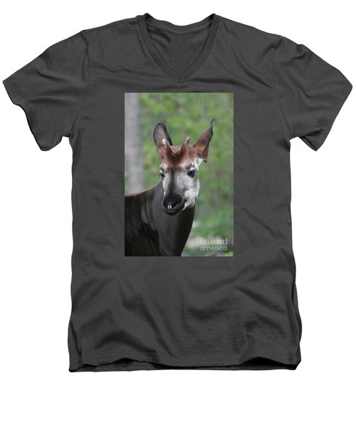 Men's V-Neck T-Shirt featuring the photograph Okapi #2 by Judy Whitton