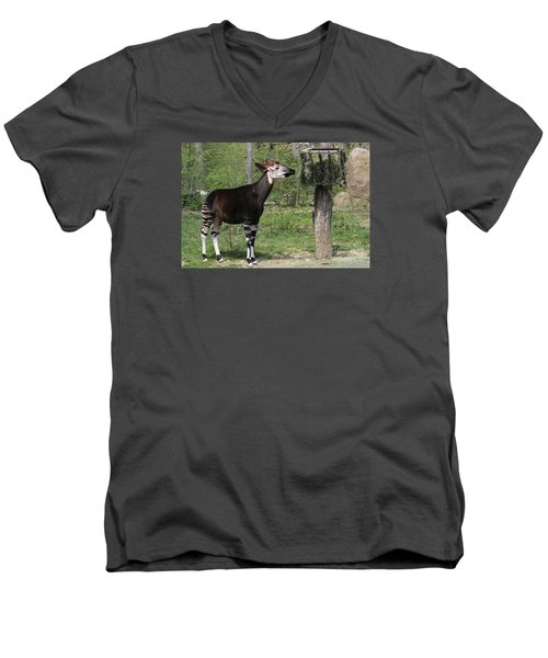 Okapi Men's V-Neck T-Shirt