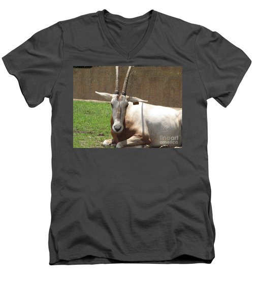 Oryx Men's V-Neck T-Shirt by DejaVu Designs