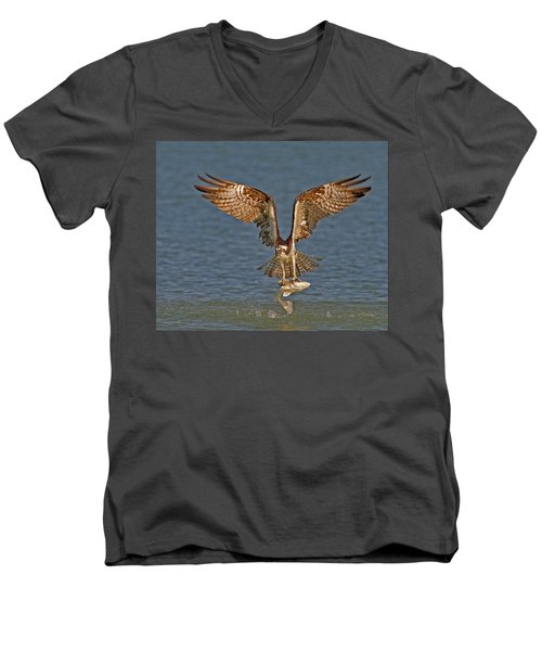 Osprey Morning Catch Men's V-Neck T-Shirt by Susan Candelario