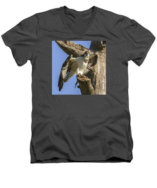 Osprey Pose Men's V-Neck T-Shirt by David Lester