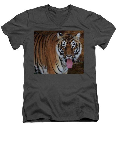 Out Of Africa  Tiger 2 Men's V-Neck T-Shirt
