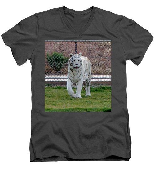 Out Of Africa White Tiger Men's V-Neck T-Shirt