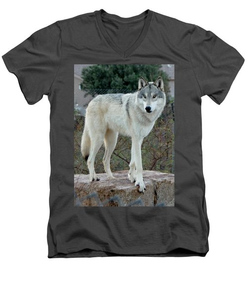 Out Of Africa Wolf  Men's V-Neck T-Shirt