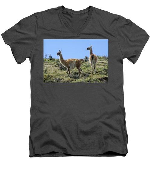 Patagonian Guanacos Men's V-Neck T-Shirt by Michele Burgess