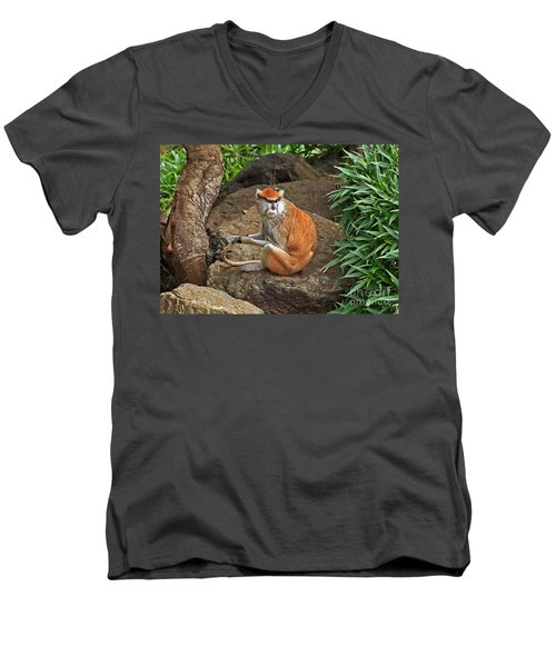 Men's V-Neck T-Shirt featuring the photograph Patas Monkey by Kate Brown