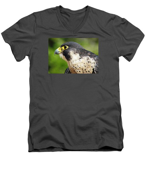 Peregrine Falcon Men's V-Neck T-Shirt