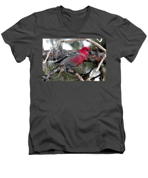 Pine Grosbeak On Ponderosa Pine Tree Men's V-Neck T-Shirt