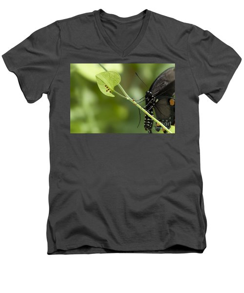 Men's V-Neck T-Shirt featuring the photograph Pipevine Swallowtail Mother With Eggs by Meg Rousher